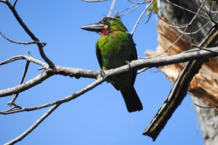 burung di hutan lindung sendiki