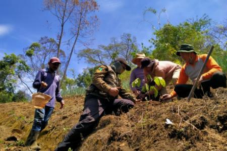 rehabilitasi hutan lindung