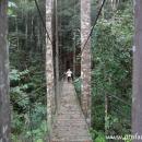 jembatan gantung di hutan Wehea