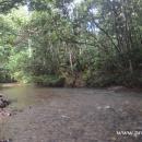 sungai di hutan Wehea