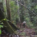 hutan lindung Wehea
