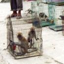 Primates trade at an animal market in north Sumatera