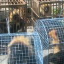 Primates trade